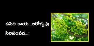 amla berry benefits