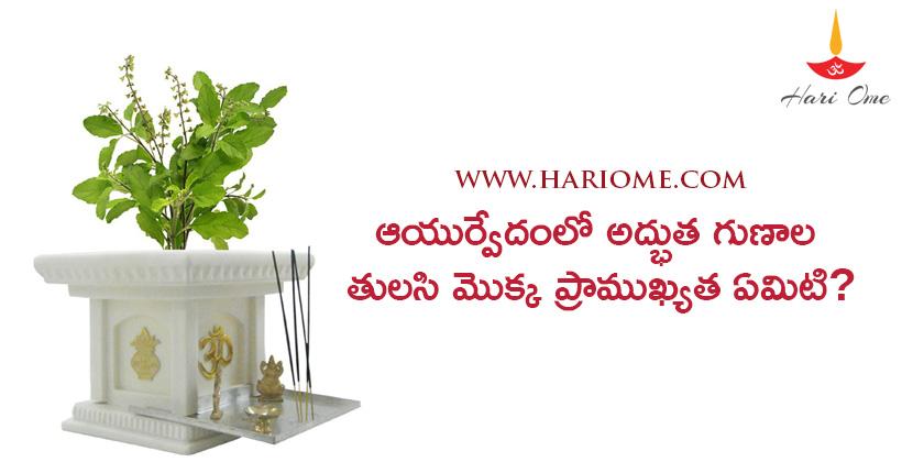 importance-of-tulsi-plant-in-ayurvedic-medicine