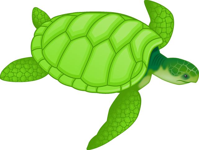 tortoise-47047_640