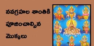 Tree to Be Worship in Navagraha Pooja