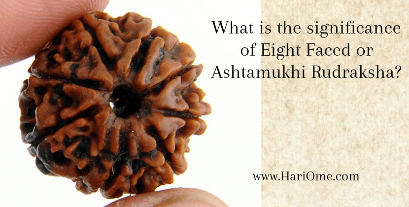 Ashtamukhi Rudraksha