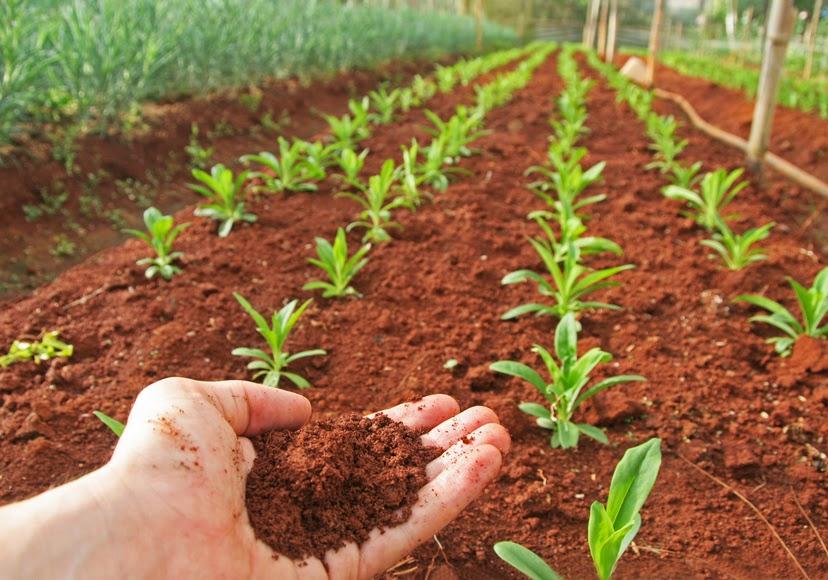 Soil Row Crops